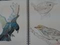 Anne-hartman-birds-1