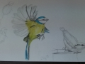 Christine-Webb-birds